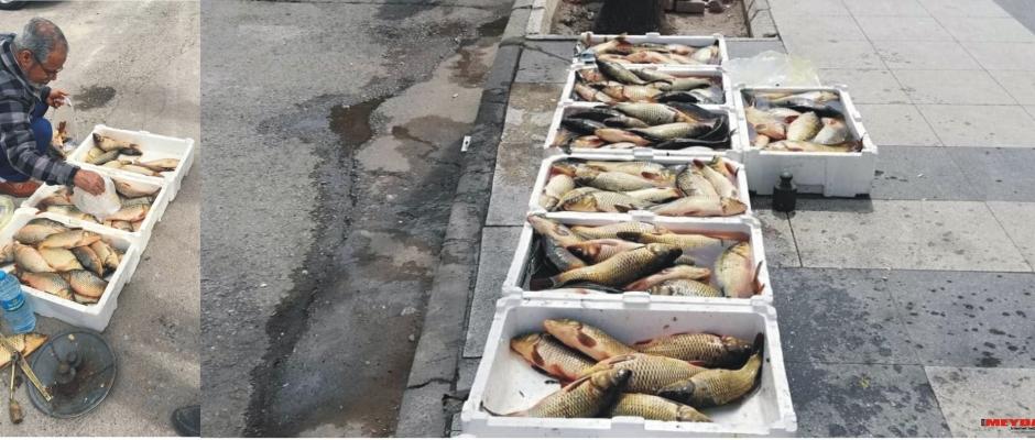 Balık Katliamına Hayır