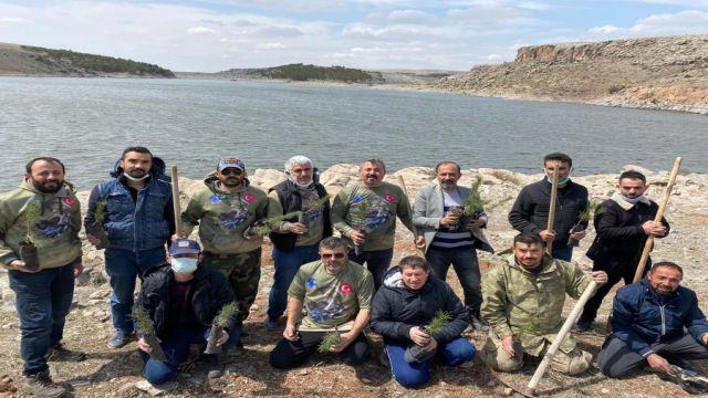 AKSOBDER'den Mamasın barajı çevresine çam fidanı